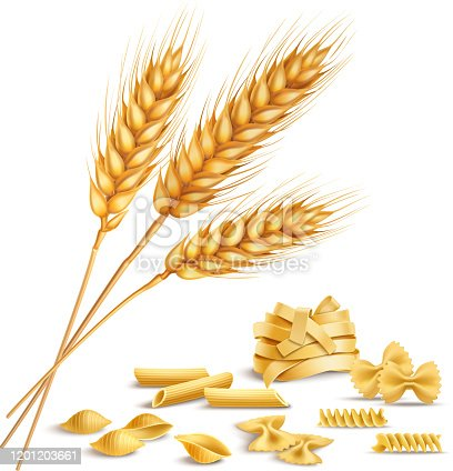 Realistic ripe wheat spikelets and pasta including fusilli, farfalle, penne composition on white background vector illustration