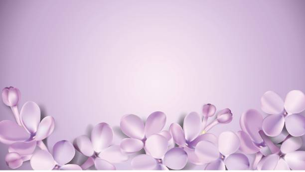 Pastel background with lilac flowers. Soft pastel color floral 3d illustration on violet background. Purple Lilac flowers and petals watercolor style vector illustration template with place for text lavender color stock illustrations