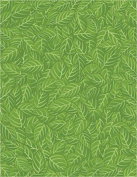 pattern leaf / feuilles - 葉狀花紋 幅插畫檔、美工圖案、卡通及圖標