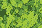 Pattern of green leaf background
