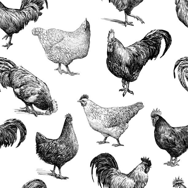 Pattern of the cocks and hens sketches Seamless background of the drawn hens and cocks. rooster stock illustrations