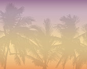 Pattern or background with realistic silhouette of tree tops, tropical palm trees, with morning orange-pink sky and with space for text - vector