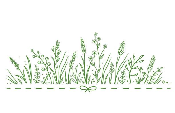 illustrations, cliparts, dessins animés et icônes de modèle avec fleurs sauvages - plante sauvage
