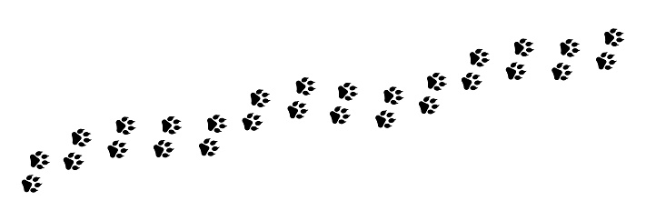 Paw foot print vector illustration. Paw  trail isolated on white background.