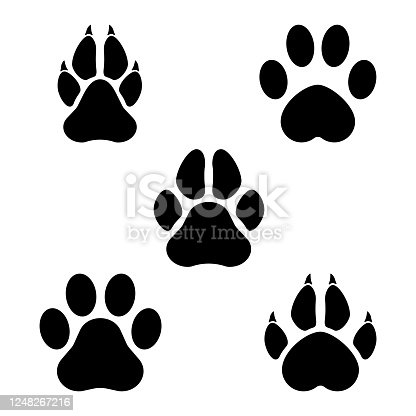istock Paw of an animal 1248267216