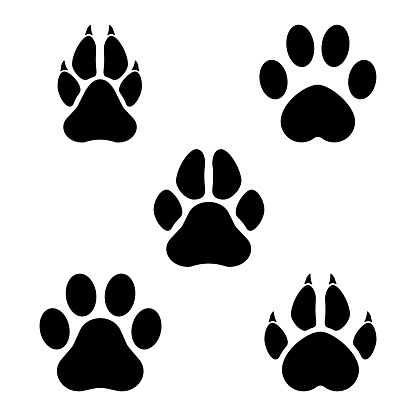 Paw of an animal
