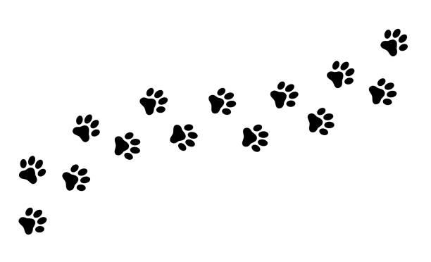 paw print kot, pies, szczeniak ślad. płaski styl - wektor czasowy. - dog stock illustrations