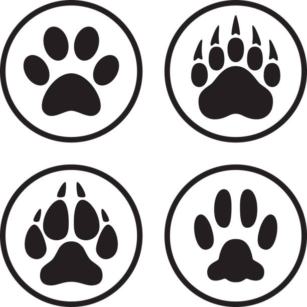 illustrazioni stock, clip art, cartoni animati e icone di tendenza di paw print icon flat line art set - lupo