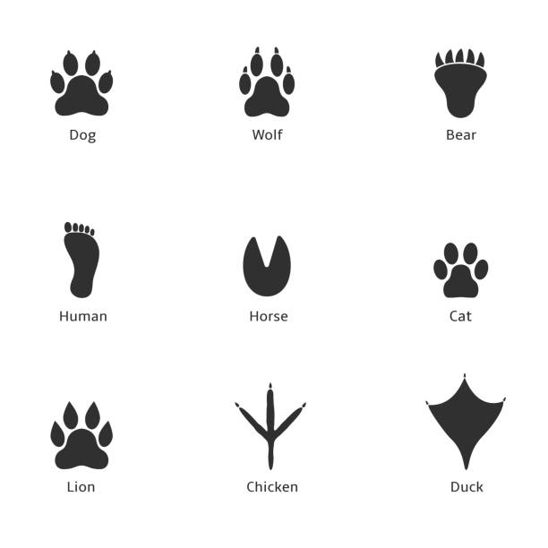 Paw print icon Paw print icon. Dog wolf bear human horse cat lion chicken duck prints ducking stock illustrations