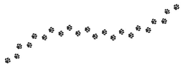 Paw print trail on white background. Vector cat or dog, pawprint walk line path pattern background Paw print trail on white background. Vector cat or dog, pawprint walk line path pattern background animal stage stock illustrations