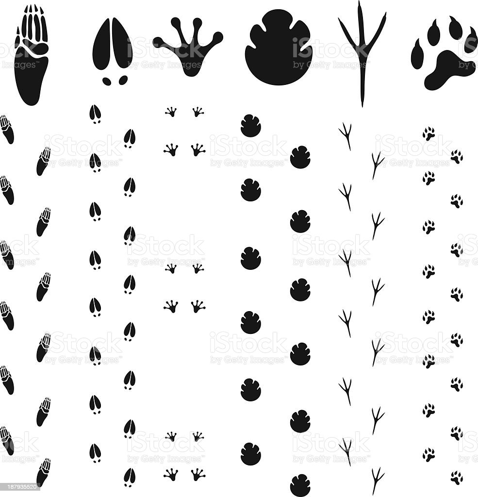 Paw Print vector art illustration