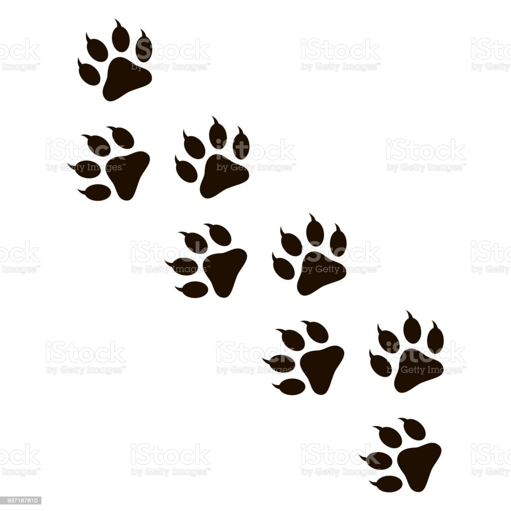 動物の足跡 - つま先のベクターアート素材や画像を多数ご用意 937187610