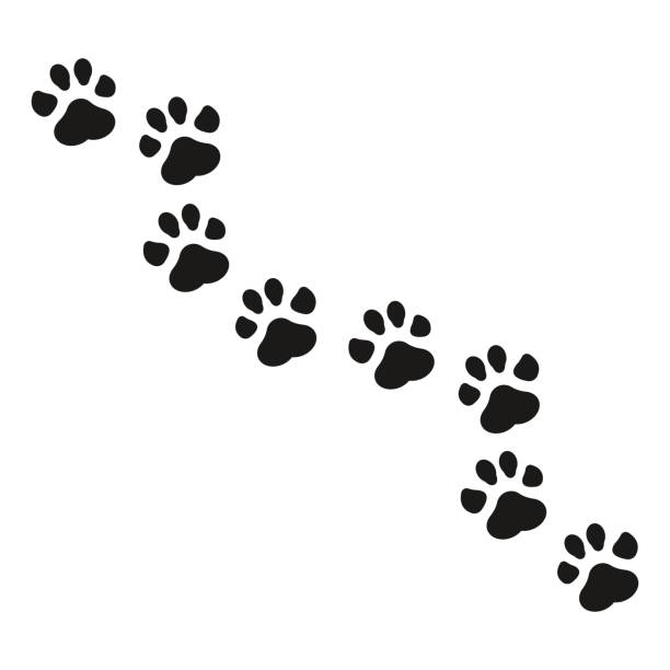 Best Muddy Paws Illustrations, Royalty-Free Vector ...
