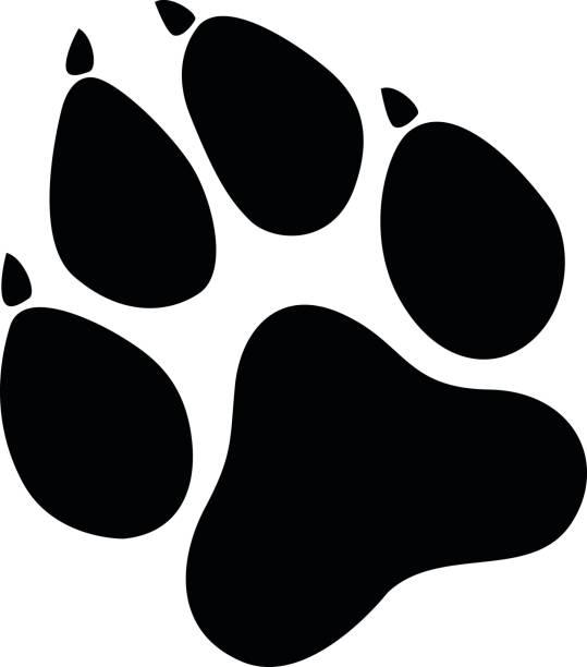 illustrazioni stock, clip art, cartoni animati e icone di tendenza di paw prints black - lupo