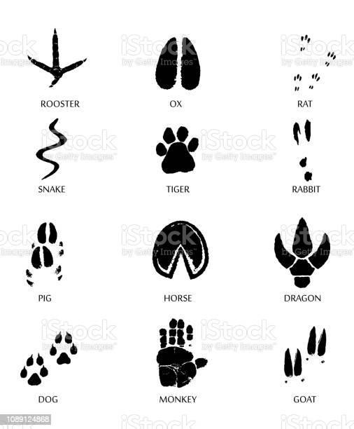 Paw prints marks footprints of rat mouse snake dragon pig rooster vector id1089124868?b=1&k=6&m=1089124868&s=612x612&h=hqhmsxpohcjcchxbhcgrm zcv3hlflukbetankugbxq=