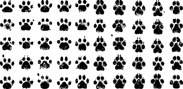 Paw prints. Cats to the left, dogs to the right.
