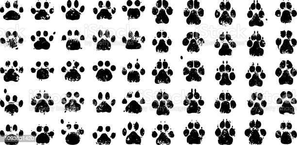 Paw prints vector id1093651420?b=1&k=6&m=1093651420&s=612x612&h=zlgww8kdwvhrtrq4 pyhwwum  5is8cd 4bhg1gidq4=