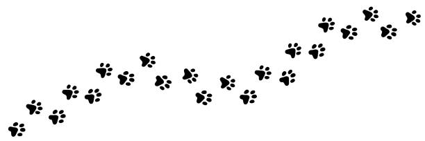 Paw vector print of cat, dog, puppy. Animal long trail. Paw vector foot trail print of cat. Dog, puppy silhouette animal diagonal tracks for t-shirts, backgrounds, patterns, websites, showcases design, greeting cards, child prints and etc. dog stock illustrations