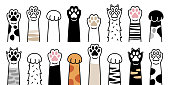 Paws up pets set isolated on white background. Vector illustration