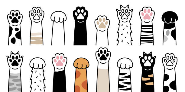 Paws up pets set isolated on white background. Vector illustration Paws up pets set isolated on white background. Vector illustration paw stock illustrations