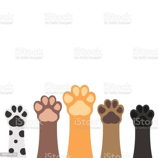 Paws up pets set isolated on white background vector illustration vector id845330036?b=1&k=6&m=845330036&s=612x612&h=fd2pw4f86u uohfytflrehreeoo0g4cfod7lmqvcd9q=