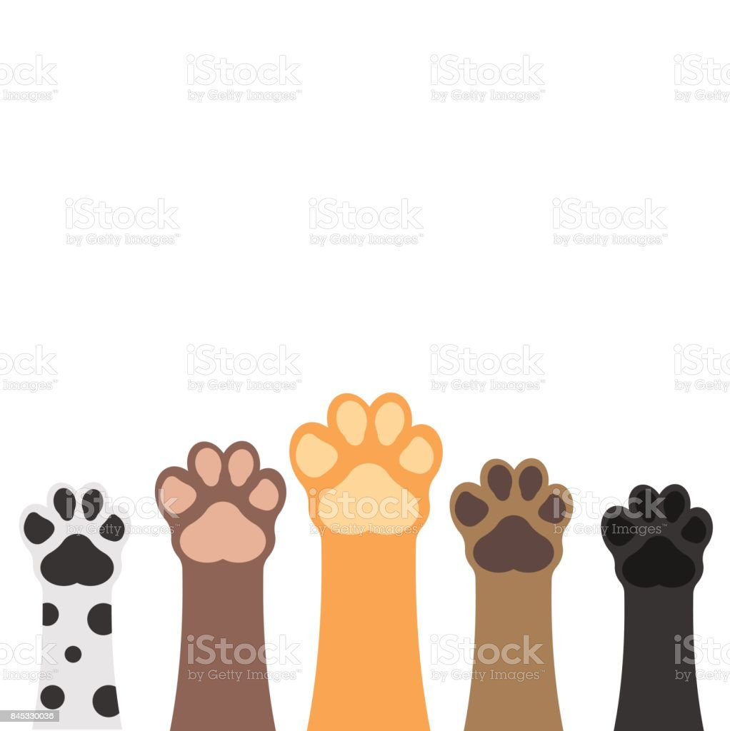 Paws up pets set isolated on white background. Vector illustration. vector art illustration