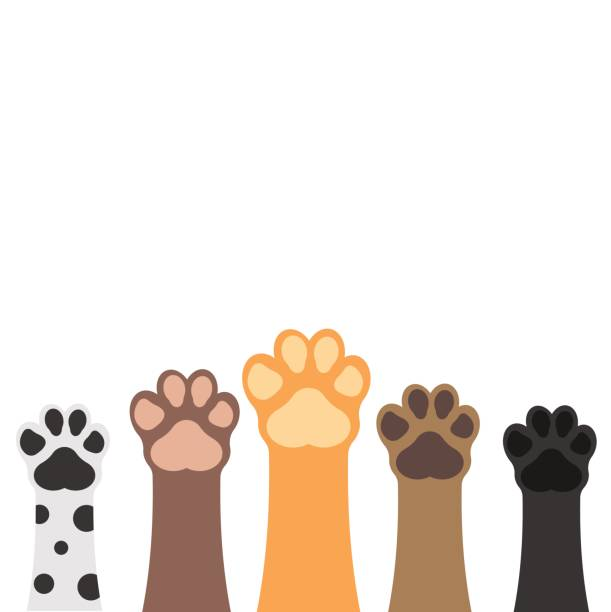 paws up pets set isolated on white background. vector illustration. - cat stock illustrations, clip art, cartoons, & icons