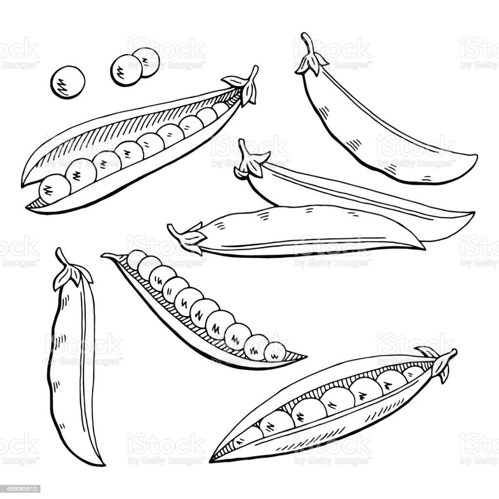 Vintage image Pea Pod Bean Retro drawing picture Instant Download printable retro clipart Black and White digital graphic HQ 300dpi
