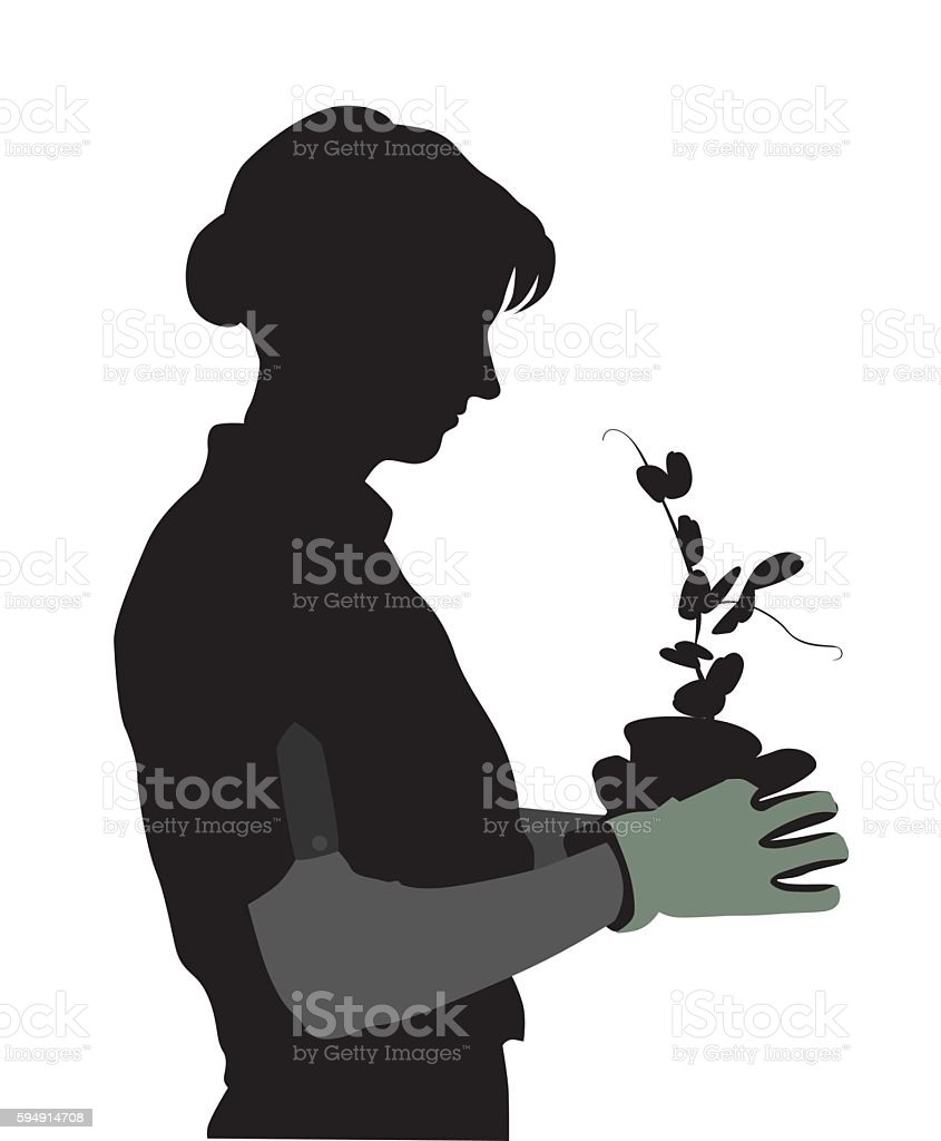 Pea Plants Growing In The Spring vector art illustration