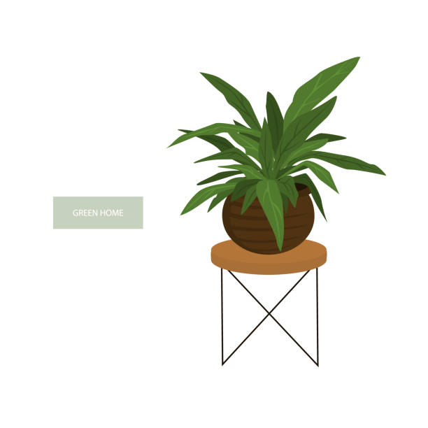 Peace Lily Clip Art Royalty Free Pe...