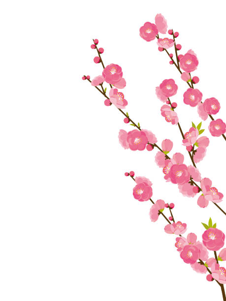 peach blossom peach blossom peach blossom stock illustrations