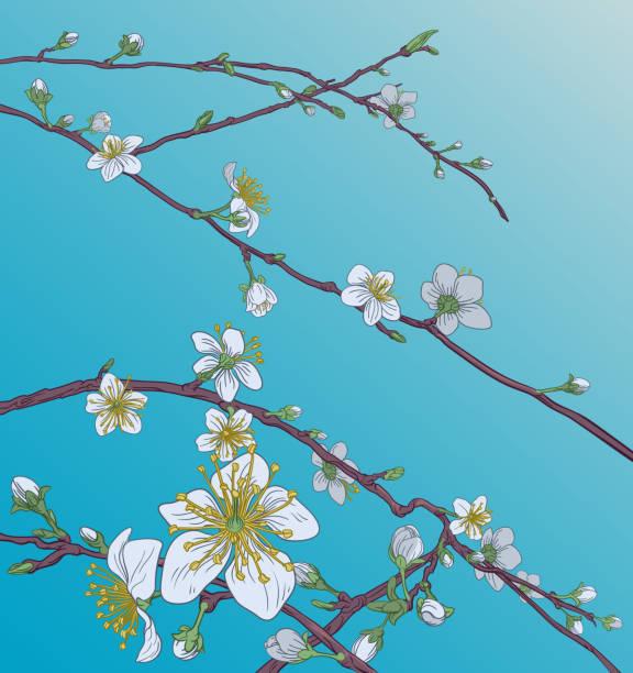 Peach Cherry Blossom Flowers Background Pattern Cherry or peach blossom tree flowers. Abstract background pattern Japanese or Chinese style spring floral fashion design. peach blossom stock illustrations