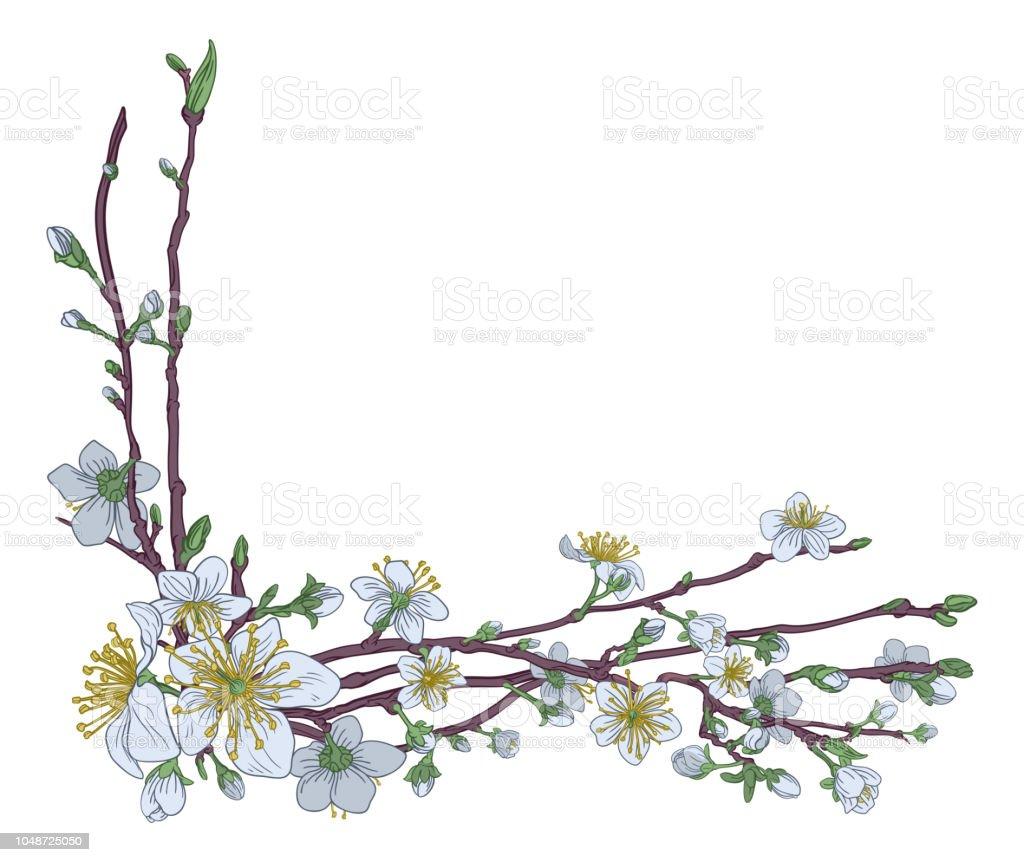 Ilustración De Diseño De Flor De Cerezo Durazno Flores Esquina Y Más