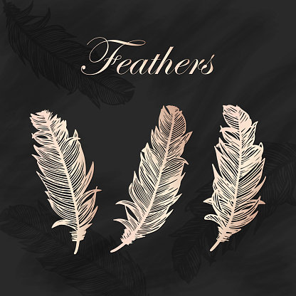 Peach Colored Metallic Feathers Collection with Blackboard Background. Design Element for Greeting Cards and Wedding, Birthday and other Holiday and Summer Invitation Cards Background.
