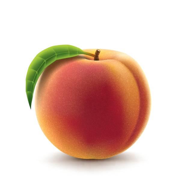 Peach fruit vector art illustration