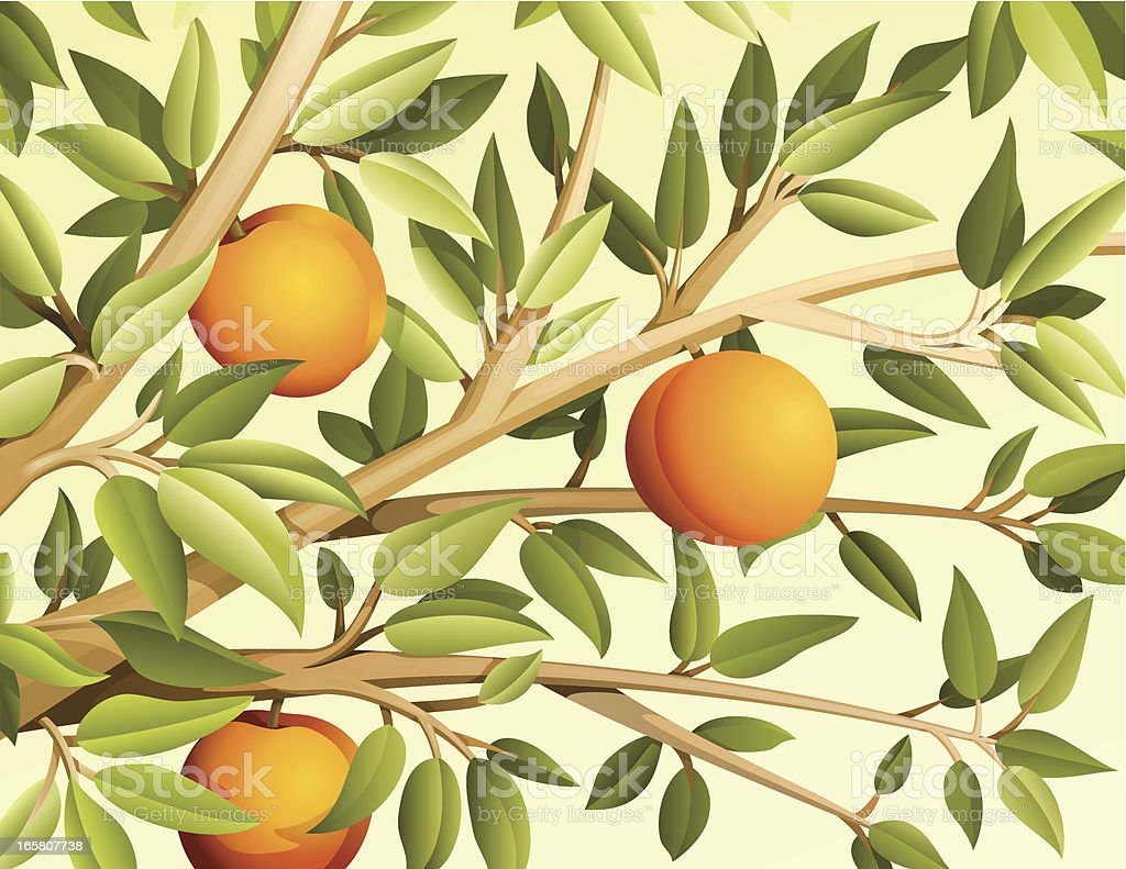 Peach tree vector art illustration