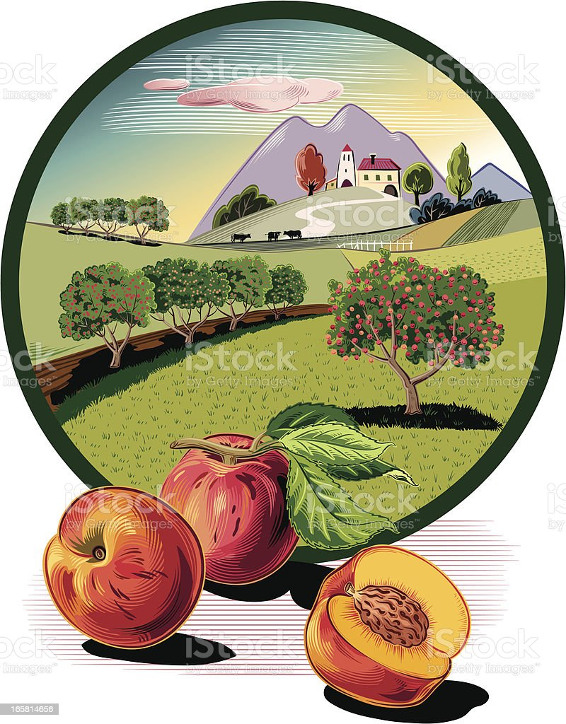 Peach trees in oval frame vector art illustration