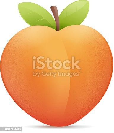 Peach vector illustration isolated on white