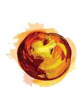 Grunge style peach - vector illustration