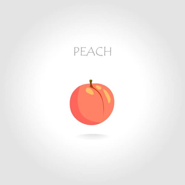 pfirsich vektor-illustration - nektarinenmarmelade stock-grafiken, -clipart, -cartoons und -symbole