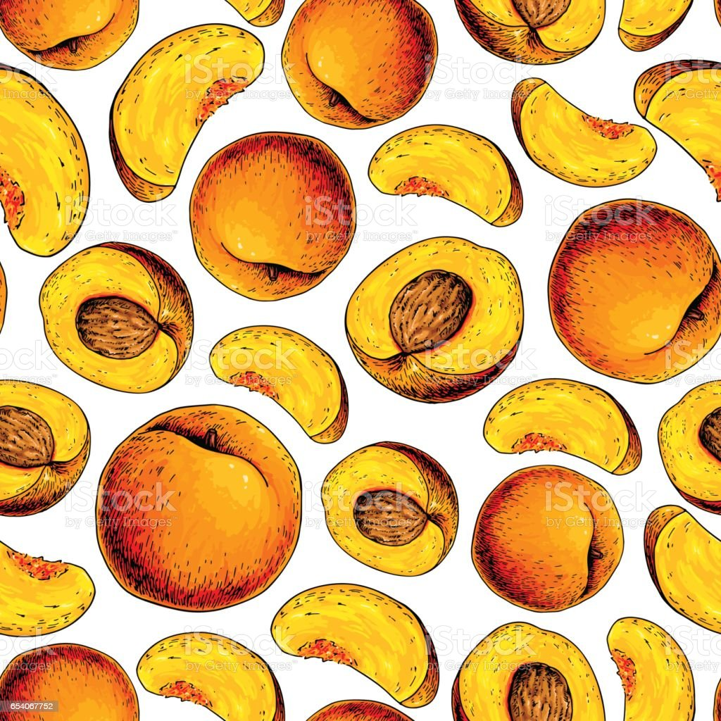 Peach vector seamless pattern. Hand drawn full and sliced pieces vector art illustration