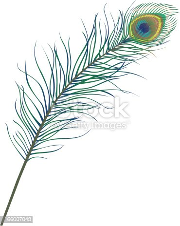 An elegant peacock feather.