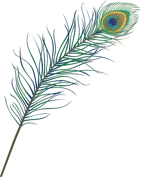 peacock feather - pfauenfarben stock-grafiken, -clipart, -cartoons und -symbole