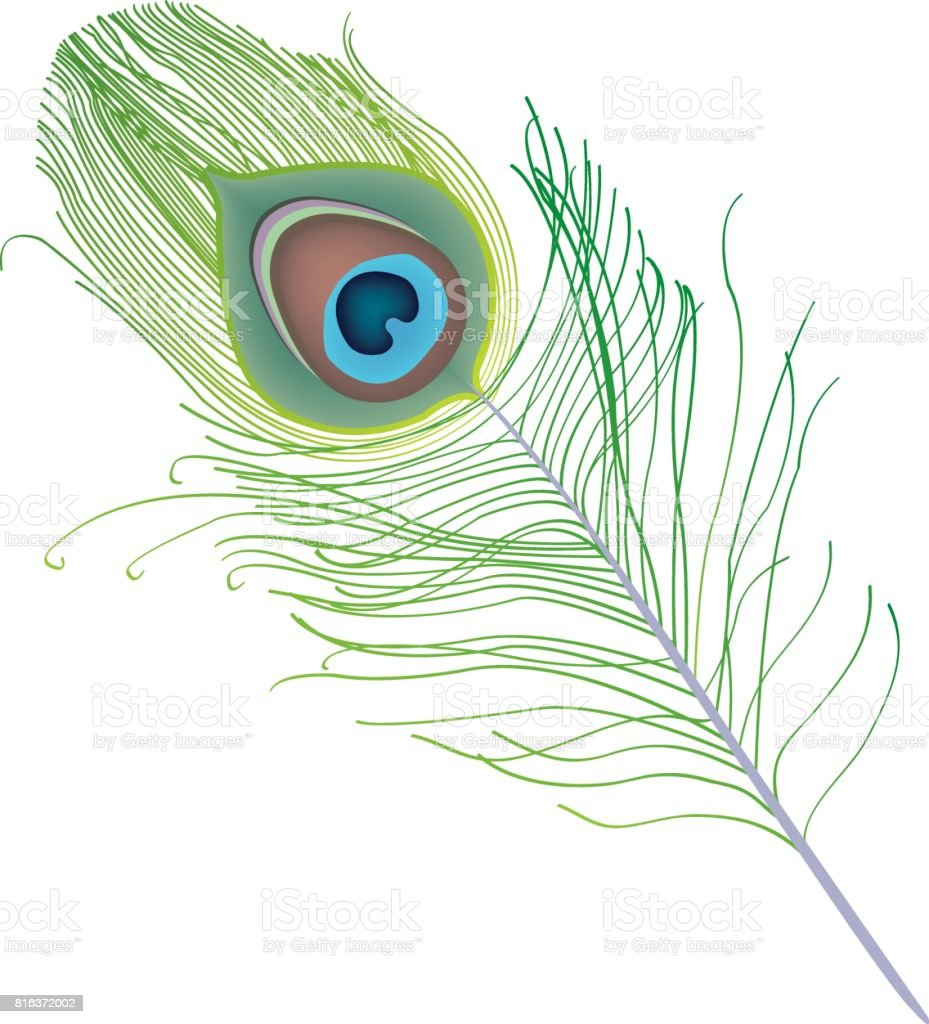 peacock feather vector stock illustration download image now istock peacock feather vector stock illustration download image now istock