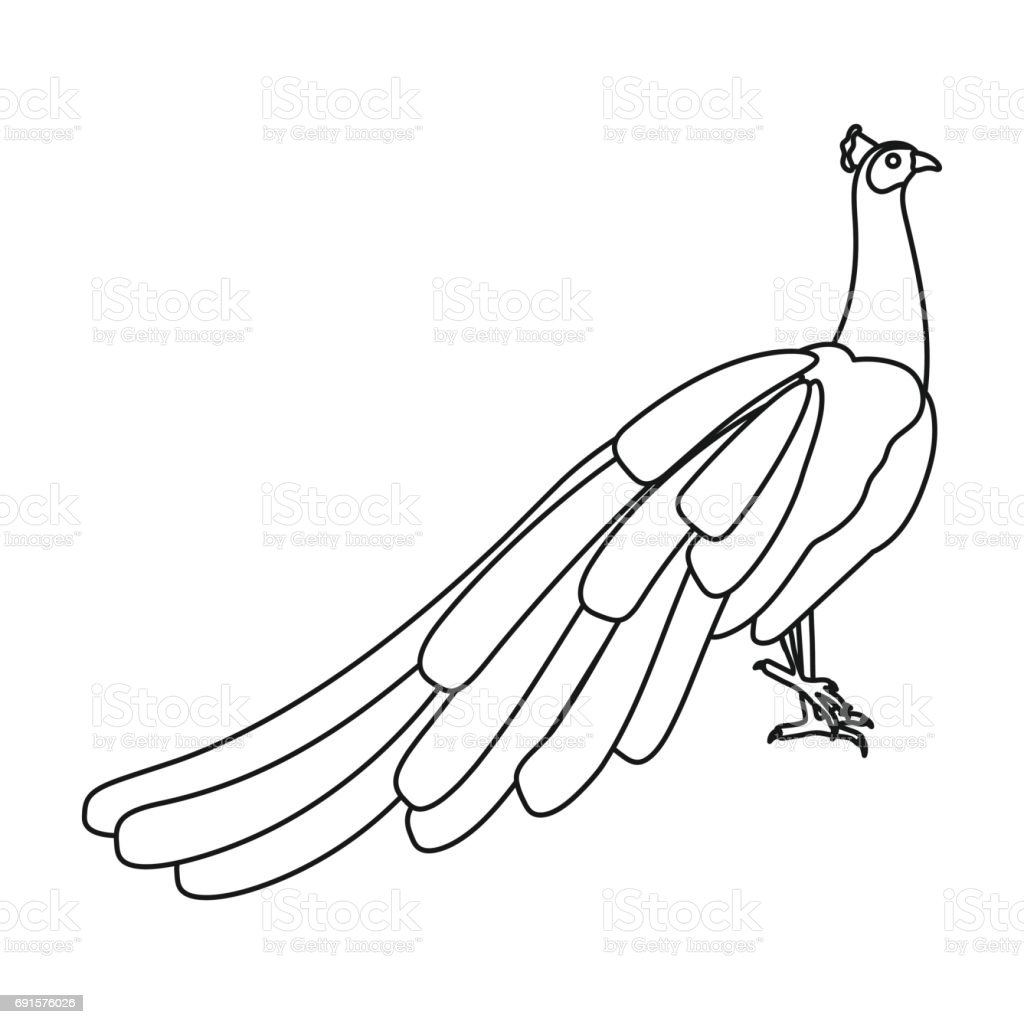 Peacock Icon In Outline Style Isolated On White Background Bird