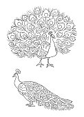 Peacock in outlines - vector illustration