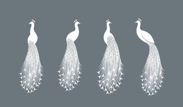 peacock logo. isolated peacock on white background - peacock stock illustrations