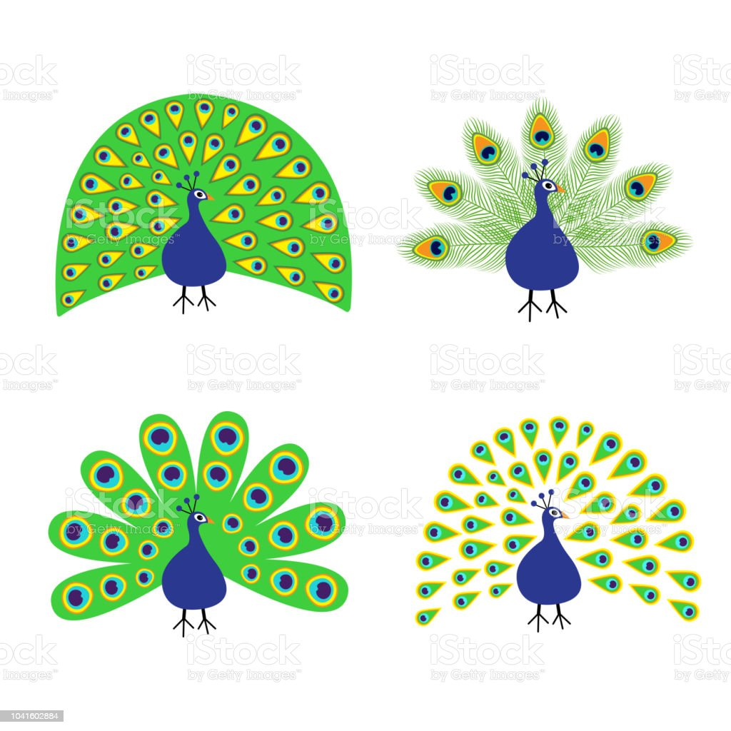 peacock set feather out open tail beautiful exotic tropical bird zoo animal collection cute cartoon character decoration element flat design white background isolated stock illustration download image now istock peacock set feather out open tail beautiful exotic tropical bird zoo animal collection cute cartoon character decoration element flat design white background isolated stock illustration download image now istock