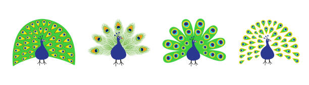 peacock set line. feather out open tail. beautiful exotic tropical bird. zoo animal collection. cute cartoon character. decoration element. flat design. white background. isolated. - peacock stock illustrations