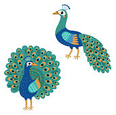 Peacock. Vector bird